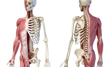 Benefits of Human Anatomy and Physiology Practice Tests