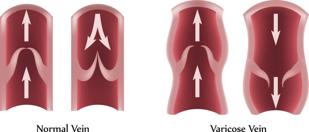how veins work